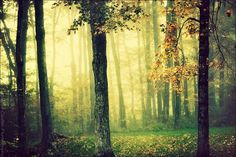 A Forest for the Trees - Foggy Woodland Photography via Etsy.