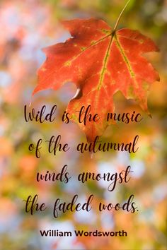There is no better way to soak in autumnal joy than to get outdoors. Let's drive on some beautiful roads to experience spectacular fall scenery. Family Adventure, Adventure Travel, Travel Around The World, Around The Worlds, Beautiful Roads, Autumn Scenery, Get Outdoors, Autumnal, Joy