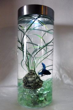 Lighted with under gravel bubbler, live plant and a Betta. Minus the Buddha Betta Fish Tank, Beta Fish, Fish Tanks, Betta Aquarium, Aquarium Design, Aquarium Ideas, Aquarium Decorations, Terrariums, Terrarium Ideas