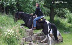 Rainbow-Valley Ranch - Missouri Foxtrotter Zucht | Rainbow-Valley Ranch - Missouri Foxtrotter Zucht