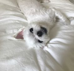 Find images and videos about cute, white and dog on We Heart It - the app to get lost in what you love. Big Friends, Lovely Creatures, Park Chaeyoung, Neko, Fur Babies, Kittens, Cute Animals, Taehyung, Naruto