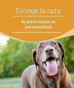 Escoge la raza de perro según tu personalidad Dicen que los animales se parecen a sus dueños... ¿o serán los dueños los que se parecen a los animales? Escoge la raza de perro según tu personalidad. #raza #personalidad #consejos #dueños