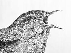 Detail Wren 2 2017 Wren, Owl, Fine Art, Bird, Detail, Illustration, Animals, Animaux, Owls