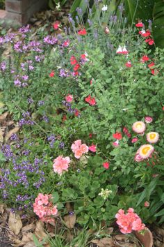 Here in Brisbane a Cottage Garden seems a distant and unattainable garden dream but with careful and appropriate selection of plant species you can still create a beautiful floriferous cottage gard...