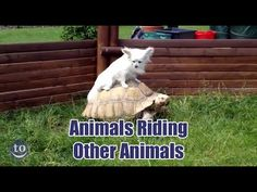 Animals Riding Other Animals - Neatorama