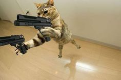 22 Best cats with guns images | Cats, Funny cats, Funny animals