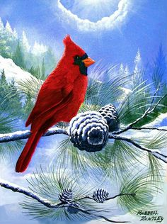 Sometimes in Winter. Northern Cardinal in a Winter Setting.Original painting is Acrylic on Canvas. - by Russell Bentley. Christmas Canvas, Christmas Paintings, Christmas Art, Bird Painting Acrylic, Painting & Drawing, Winter Painting, Winter Art, Pretty Birds, Beautiful Birds