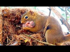 A squirrel begged a man to help her baby, who was in trouble Animals And Pets, Baby Animals, Cute Animals, Wild Animals, Funny Animals, Snoopy Dog House, Tiny Dog Breeds, Dog Training Courses, Scrap Fabric Projects
