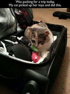 Was Packing For My Trip And My Cat Did This cute animals cat cats adorable animal kittens pets kitten funny animals funny cats Animals And Pets, Baby Animals, Funny Animals, Cute Animals, Cute Cats, Funny Cats, Funny Cat Photos, Funny Pictures, Cat Memes