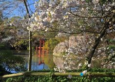 Gardening:Sunny Botanical Gardens Design Tricks Real Estate Gardening Decor Home Exterior Decoration House Garden Ideas Shinto Shrine Seen Amongst The Blossoms At The Japanese Hill And Pond Garden At The Brooklyn Bot 8 Design Tricks From Sunny Botanical Gardens