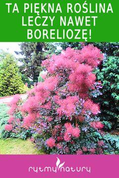 Herbs, Garden, Plants, Diet, Garten, Lawn And Garden, Herb, Gardens, Plant