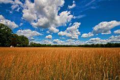 Spring Fields,original photo by Jerry Bain.