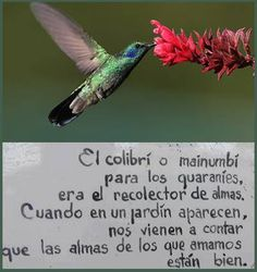 Sistema Solar, Life Inspiration, Mythology, Favorite Quotes, Cute Animals, Motivation, Hummingbirds, Words, Mexico