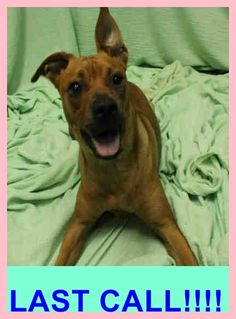 ROSE (A1672165) I am a female brown Terrier mix. The shelter staff think I am about 1 year old and I weigh 40 pounds. I was found as a stray and I am available for adoption. — hier: Miami Dade County Animal Services. https://www.facebook.com/urgentdogsofmiami/photos/pb.191859757515102.-2207520000.1422817186./919564481411289/?type=3&theater