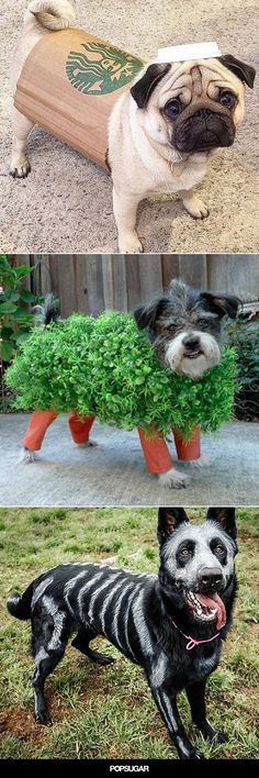15 of the Best DIY Halloween Dog Costumes Out There is part of Dog halloween costumes diy - The air's getting crisp, pumpkins are popping up on porches, and you're stocking up on funsize candy — must be time to start brainstorming costumes! Diy Dog Costumes, Pet Halloween Costumes, Animal Costumes, Spooky Halloween, Dog Costumes For Kids, Costume Ideas, Friend Costumes, Holiday Costumes, Cute Funny Animals