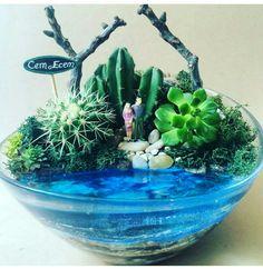 Air Plant Terrarium, Garden Terrarium, Succulents Garden, Mini Plants, Indoor Plants, Mini Fairy Garden, Dish Garden, Paludarium, Fairy Garden Accessories