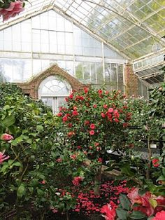 Camellia house at Planting Fields Arboretum State Historic Part in Oyster Bay, NY