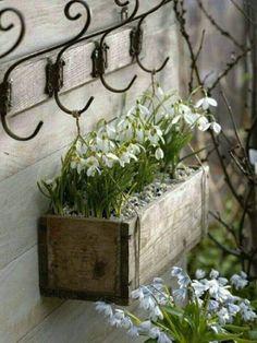 Decoration ideas with snowdrops- Deko-Ideen mit Schneeglöckchen Snowdrops in a wooden box - Garden Cottage, Garden Pots, Vegetable Garden, Container Plants, Container Gardening, Deco Floral, Garden Projects, Spring Flowers, Spring Blooms