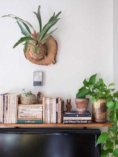 A Chifre-de-veado é uma planta ornamental que fica linda usada na parede