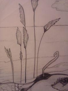 Beach scenery, drawing