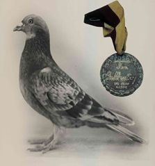 "A carrier pigeon or messenger pigeon is a homing pigeon (specifically a domesticated rock pigeon, Columba livia) that was used to carry messages, generally called ""pigeon post"". Carrier pigeons of the Racing Homer breed were used to carry messages in World Wars I and II ~~ 32 such pigeons were presented with the Dickin Medal (shown above). #Pigeon #Post #Paloma #Mensajera #6thCentury"