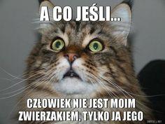 Cute Animal Memes, Cute Memes, Funny Animals, Funny Memes, Scary Funny, Wtf Funny, Funny Cute, Old Memes, Happy Photos