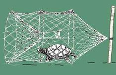 Snapping turtle trap is used for sport and removing nuisance turtles from ponds. Turtle trap comes complete with bridles, bait bag and hints on turtle trapping. Best Fishing Rods, Fishing Rigs, Going Fishing, Bass Fishing, Fishing Boats, Turtle Traps, Skinny Water, Snapping Turtle, Different Fish