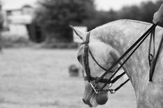 Arty shot of one of the horses Show Us, Show Jumping, Horses, Photo And Video, Summer, Animals, Summer Time, Animaux, Summer Recipes