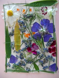 Nezadržitelně se blíží období, kdy začnou vykvétat první květiny. Některé budeme již brzy moci najít, jak vykukují ze zbytků sněhové pokrývky. Je tedy nejvyšší čas na přípravu jarního herbáře, knihy o jarních květinách. Ukažte dětem, jak lze krásné květy zachovat. Tvořit první herbáře lze i s velmi malými dětmi. Snažte se s nimi tvořit herbář kreativním a zábavným způsobem tak, aby měly děti ze sbírání a uchovávaní květin radost. O co se jedná? Do jednoduchého jarního herbáře se snažte…