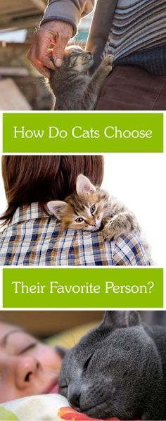 Does your cat have a favorite person? Is it you?