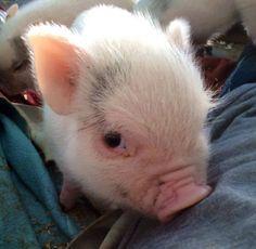 Piggy                                                                                                                                                                                 More