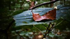 """"""" Wer jetzt kein Haus hat, baut sich keines mehr. Wer jetzt allein ist, wird es lange bleiben, wird wachen, lesen, lange Briefe schreiben und wird in den Alleen hin und her unruhig wandern, wenn die Blätter treiben."""" Rilke #foto #photography #autumn"""