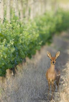 Nature welcomes you at our peaceful cottages only 30min drive from Cape Town! Weekends Well Spent #accommodation #cottages #winelands #vineyard #relax #weekend #getaway