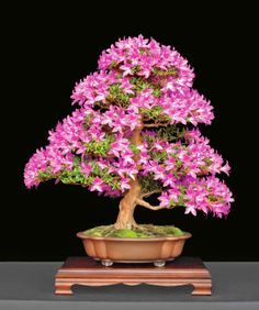Durham Council of Garden Clubs: Triangle Bonsai Society Holds 2014 Exhibition, June 7-8