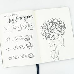 Need to study to create beautiful and delightful flower doodles to your bullet journal layouts? Be taught these wonderful doodle flower patterns and tutorials which can be quite simple. These fairly, step-by-step botanical doodles may[. Easy Flower Drawings, Flower Drawing Tutorials, Drawing Flowers, Drawing Ideas, Paint Flowers, Pretty Flower Drawing, Beautiful Easy Drawings, Pretty Drawings, Drawing Step