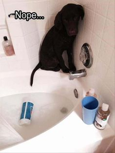 Funny Animal Picture Dump Of The Day 28 Pics