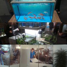 Aquaristik CSI auf der Interzoo 2018. ...im Gep�ck viele Neuheiten aus der Welt der Aquaristik.