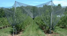 Anti hail netting over fruit trees and crops to keep hails, pest birds out