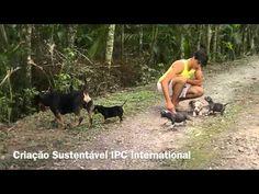 Nanny Dog American Bully IPC International Pedigree