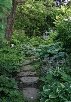 6 Astounding Useful Ideas: Zen Backyard Garden Paths backyard garden for beginners.Zen Backyard Garden Paths backyard garden shed cabin. Hosta Gardens, Garden Shrubs, Garden Paths, Garden Shade, Ferns Garden, Backyard Shade, Garden Art, Shade Perennials, Shade Plants