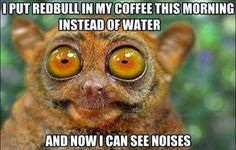 Funny Animals | I put redbull in my coffe this morning.