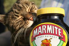 Cats and marmite in one picture! so much awesome! Marmite Recipes, Sphinx, Yeast Extract, All About Cats, Great British, Fauna, Quick Recipes, Cat Love, Fur Babies
