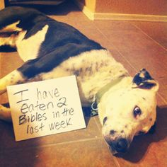 An epic gallery of 30 best dog shaming pictures that prove these dogs are the naughtiest in the world. The best dog shaming photo gallery that features the most hilarious, most shameful, and never-before-seen puppy misdeeds. Dog Shaming Pictures, Dog Pictures, Funny Pictures, Random Pictures, Pet Photos, Funny Images, Funny Dogs, Cute Dogs, Funny Animals