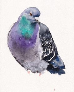 Pigeon, Our Love, Love You, Artist Materials, Whale, Arts And Crafts, Thankful, Colours, Watercolor