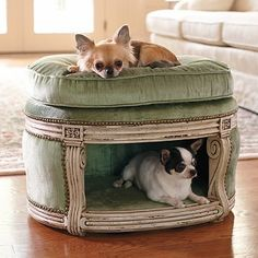 Cute dogs + upholstered pet bed stool inspiration