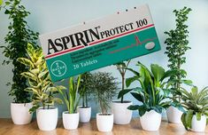 Benefits of Aspirin for Plants and Flowers: How to Use Aspirin?