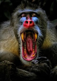 How on earth did the baboon come about? Crazy uncredited image. Love that he's look straight into the camera.