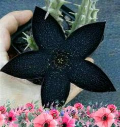 Planting Flowers, Cactus, Natural, Beauty, Color, Gardening, Garden, Ideas, Succulents
