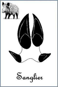 Sanglier (Sus scrofa) Plus Bear Footprint, Animal Tracks, Wilderness Survival, Land Art, Deck Of Cards, Activities For Kids, Stencils, Education, Drake