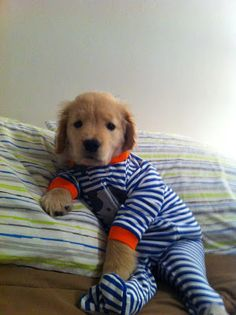 i should have dressed tucker like this lol he would have let me :) Cute Lab Puppy in Footie Pajamas!